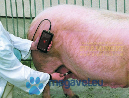 DRAMINSKI Ultrasonic tester for pigs (DRM)