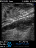 The ovaries (cow)-photos of ULTRASOUND