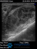 Metritis (cow)-photos of ULTRASOUND