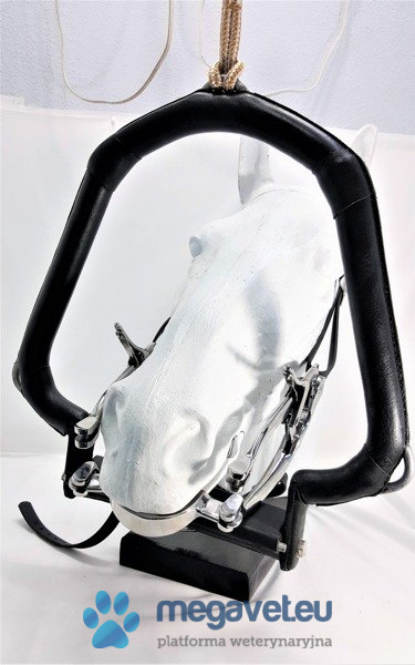 Halter horse (head ring) (FET)
