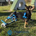 Wheelchair for animals-project individual [CBE]